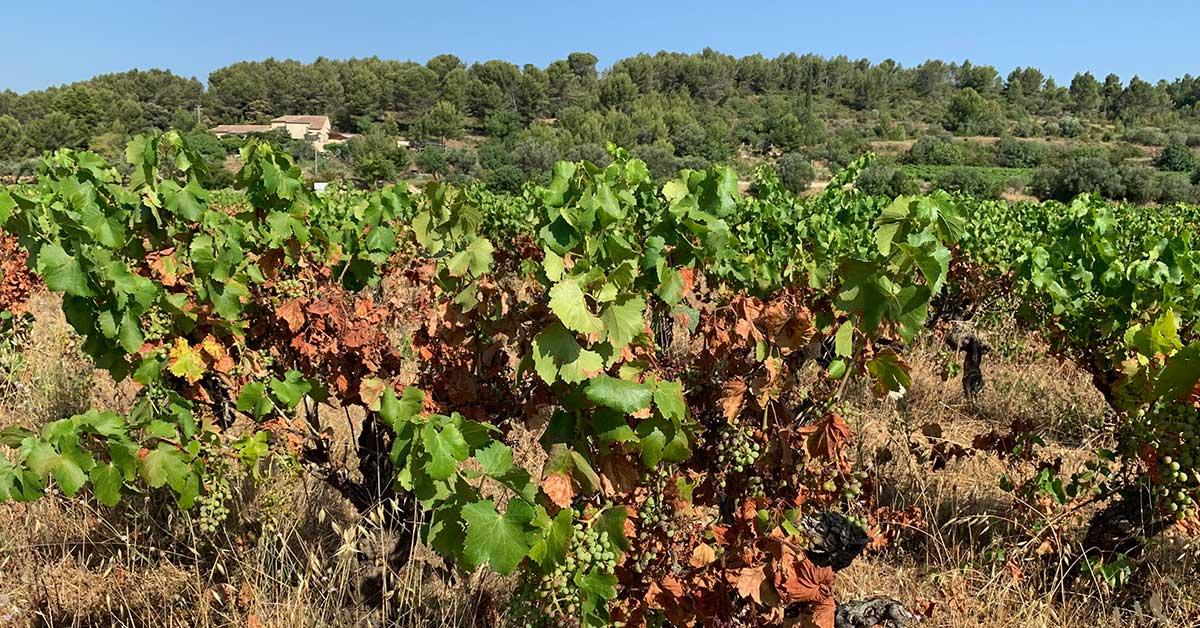 Le defi du climat pour la viticulture