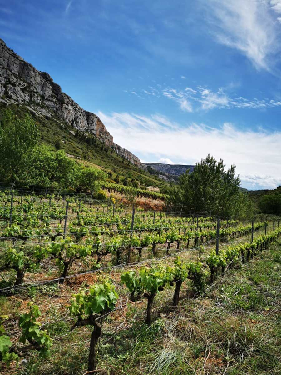 vins natures mariota